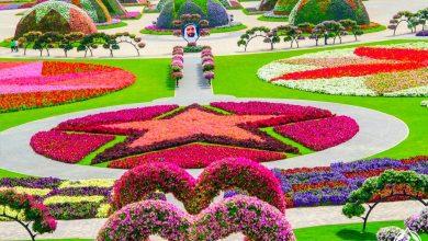 Photo of حديقة زهور دبي 🇦🇪المعجزة – ميراكل جاردن