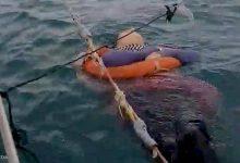 Photo of العثور على امرأة حية وسط البحر بعد عامين من اختفائها