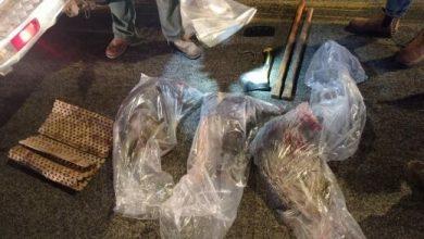 Photo of توقيف شابين من مدينة عرابة بشبهة الصيد غير القانوني