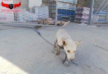 Photo of انقاذ جرو من حفرة صرف صحيّ في قرية زلفة