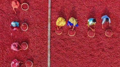 """Photo of """"بحر البطاطا الحمراء"""" في بنغلاديش"""
