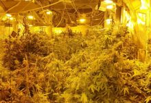 Photo of الطيبة: ضبط مختبر لزراعة مخدرات الميرحوانا داخل مخزن