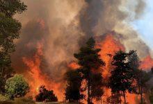 Photo of حريق هائل يلتهم جبال القدس: عشرات طواقم وطائرات الإطفاء في المكان